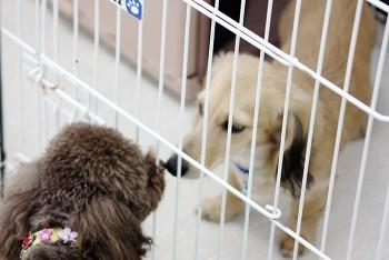 仔犬の社会化とは画像