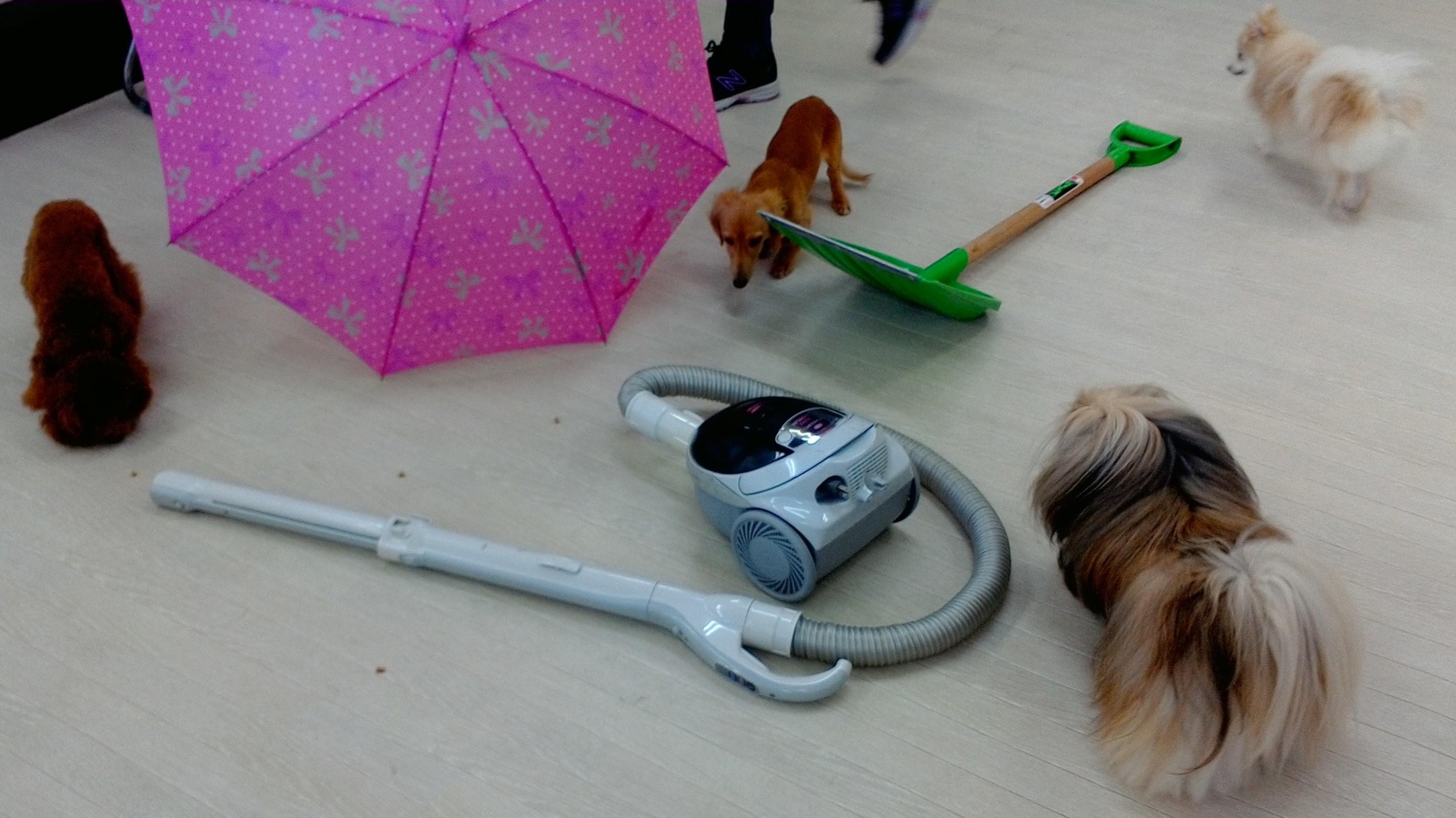 傘・掃除機・スコップへの社会化